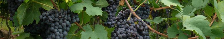 Valpolicella Wine Tour Conegliano Limo Service - Limo Car Rental with Driver Service