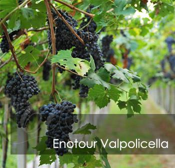 Enotour Valpolicella