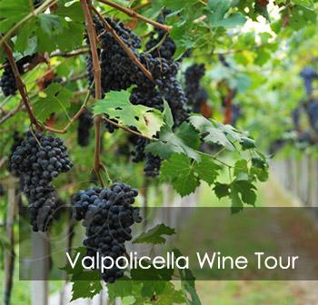 Valpolicella Wine Tour